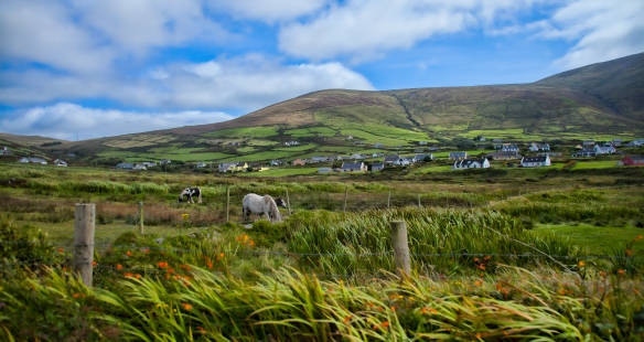 Fields of Kerry