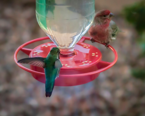 Finch&Hummer-2 (1 of 1)