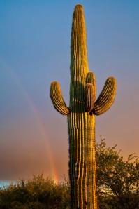 Rainbow&Cactus-1