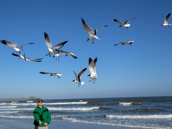 Man and the Birds