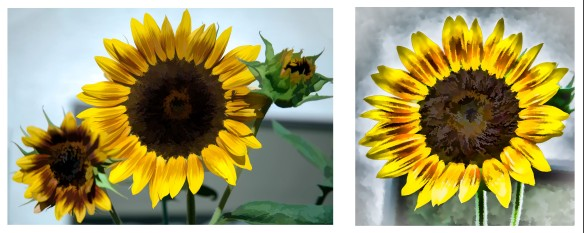 Two Sunflowers PA-1