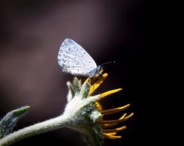 Tiny_Moth-1j (1 of 1)