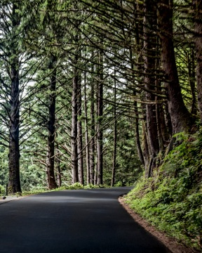 Road to Ecola State Park, OR