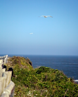 Oregon Coast Scenic Overlook