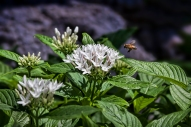 HGR Bee 1j (1 of 1)