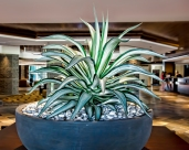 HGR Lobby Plantj (1 of 1)