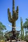 Hyatt Cactus & Statue 1 (1 of 1)