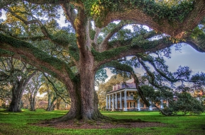 2) Houmas House Plantation - Vacherie, LA